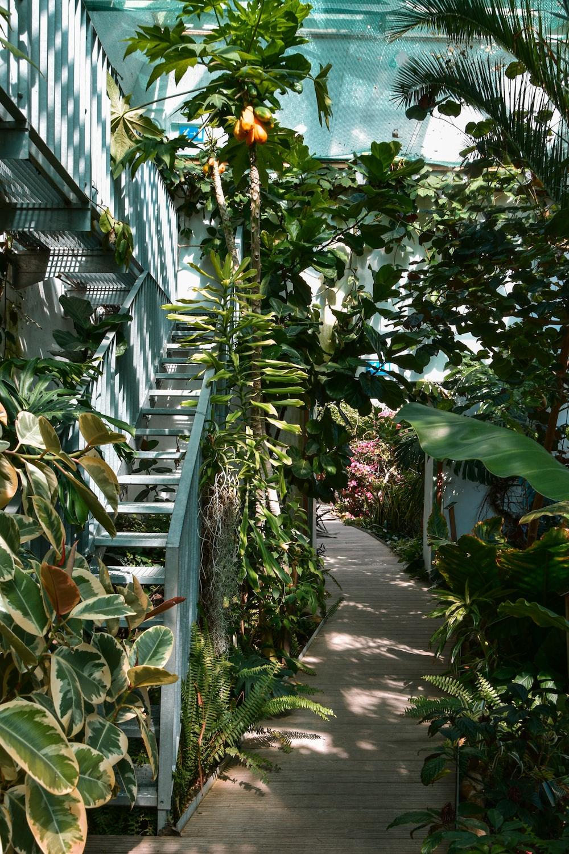 green banana plants on the garden during daytime