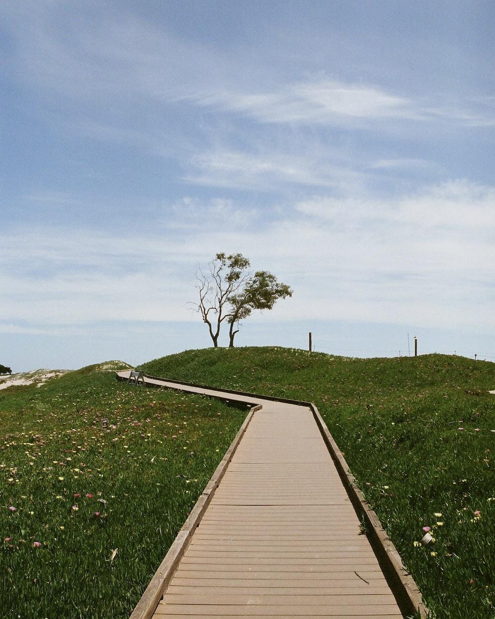 brown wooden dock on green grass field under blue sky during daytime