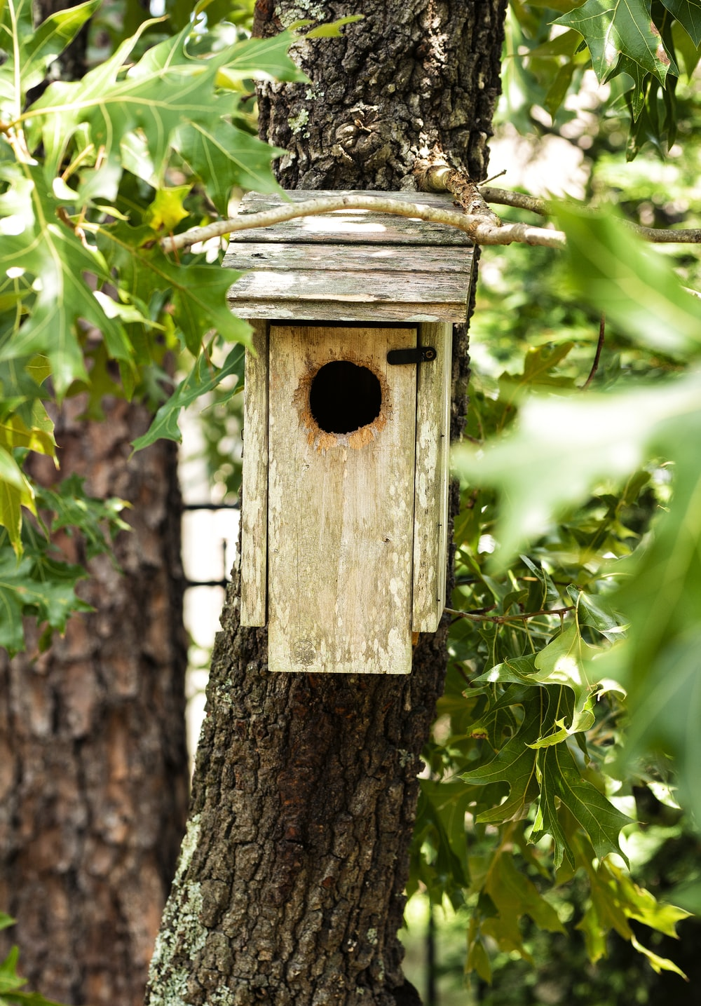 brown wooden bird house on brown tree