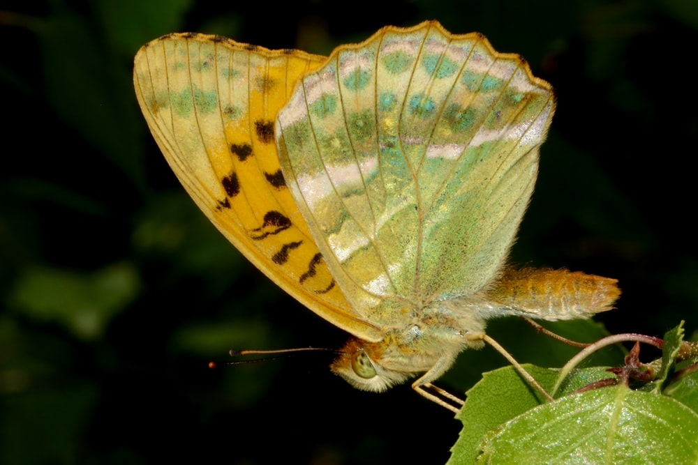 yellow and green butterfly in close up photography during daytime