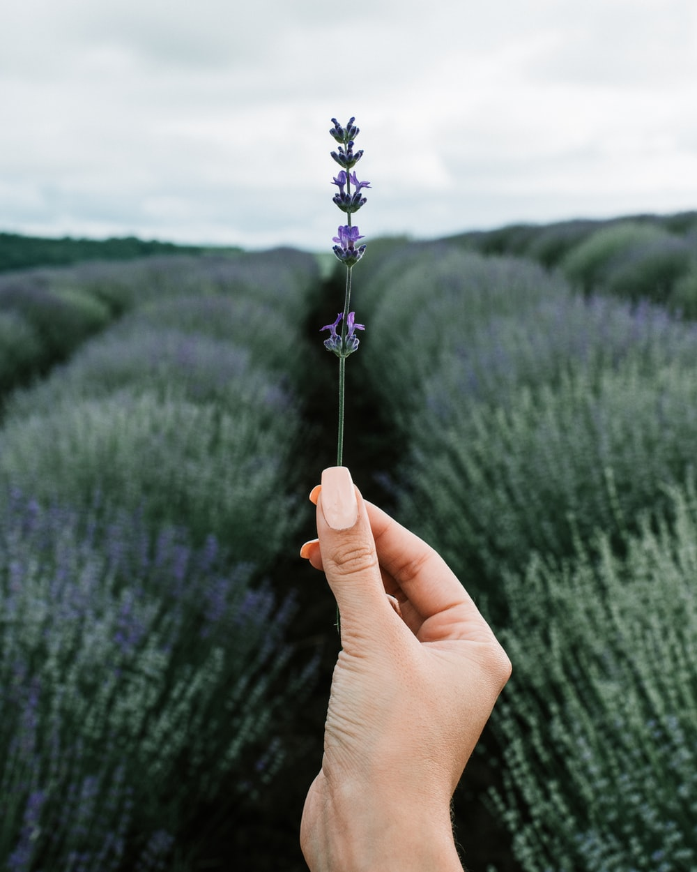 person holding purple flower during daytime