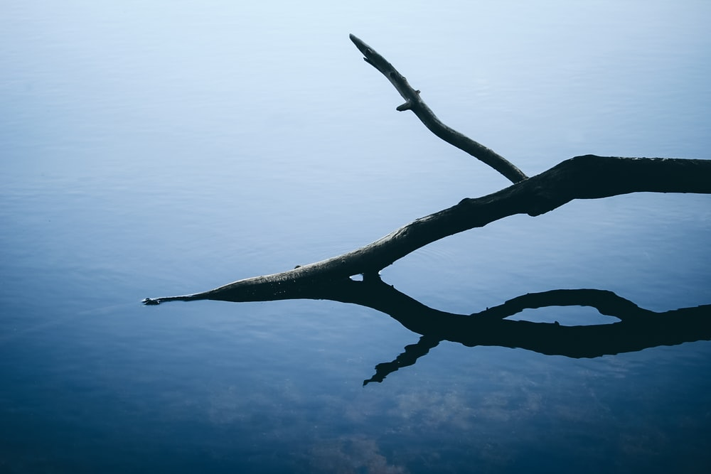 brown tree branch with water droplets