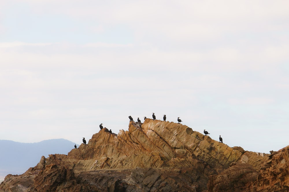 group of people on brown rock formation during daytime