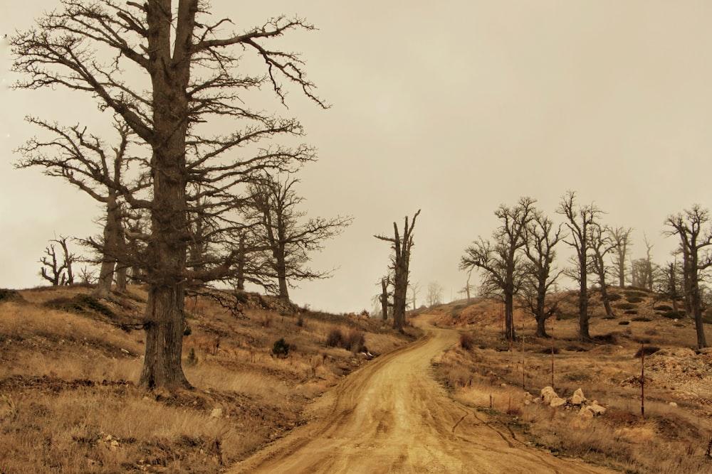 brown dirt road between trees