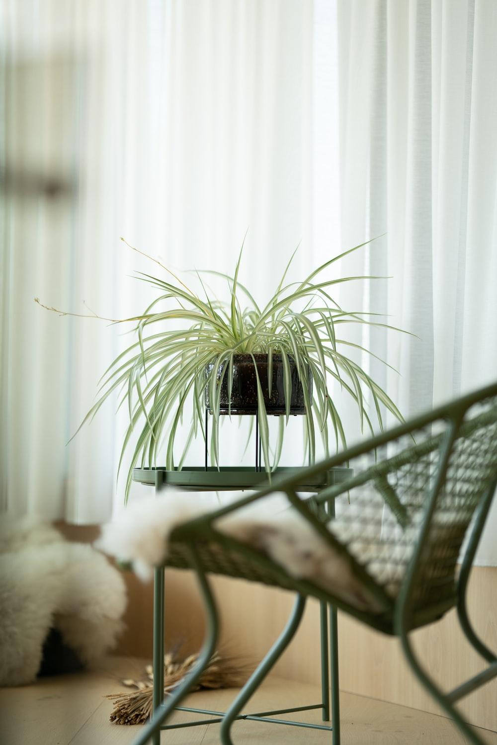green plant on black metal table