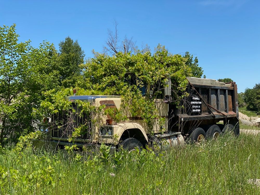 green trees beside brown and gray vintage truck during daytime