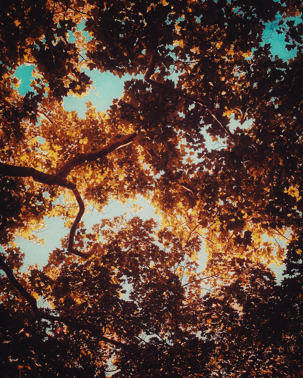 low angle photography of brown leaf trees during daytime