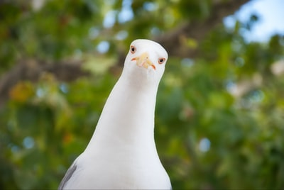 portrait of curious seagull