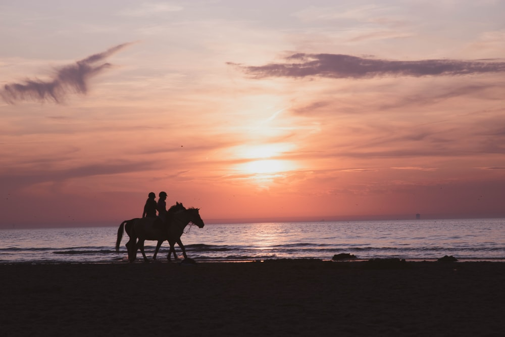 silhouette of 2 people riding horses on beach during sunset
