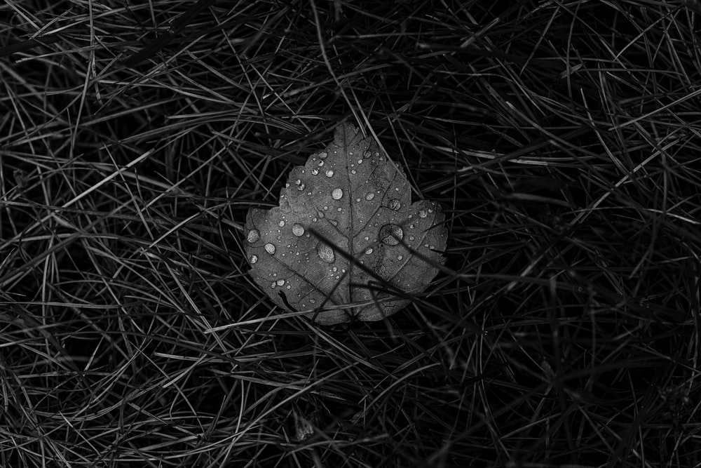 grayscale photo of water droplets on leaf