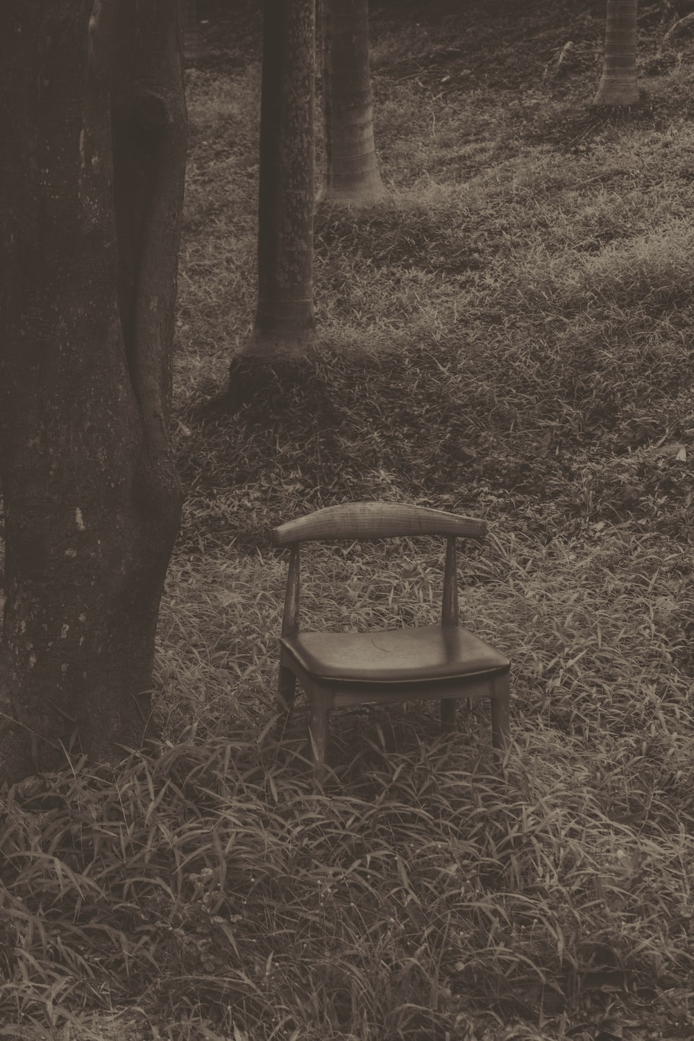 grayscale photo of chair near tree