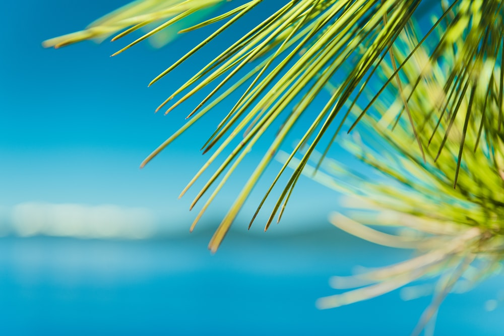 green palm plant near body of water during daytime