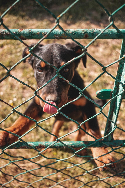 black and tan short coat medium sized dog on green metal fence during daytime