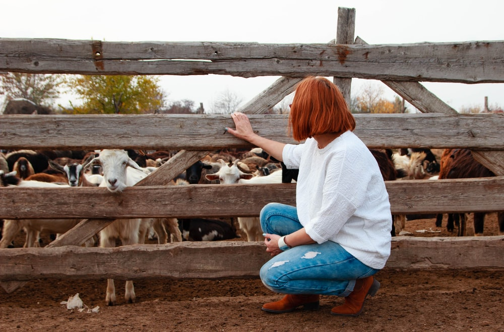 woman in white long sleeve shirt and blue denim jeans sitting on brown wooden fence