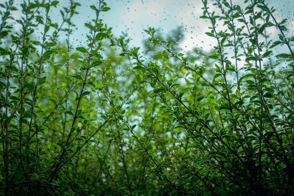 green grass under sunny sky