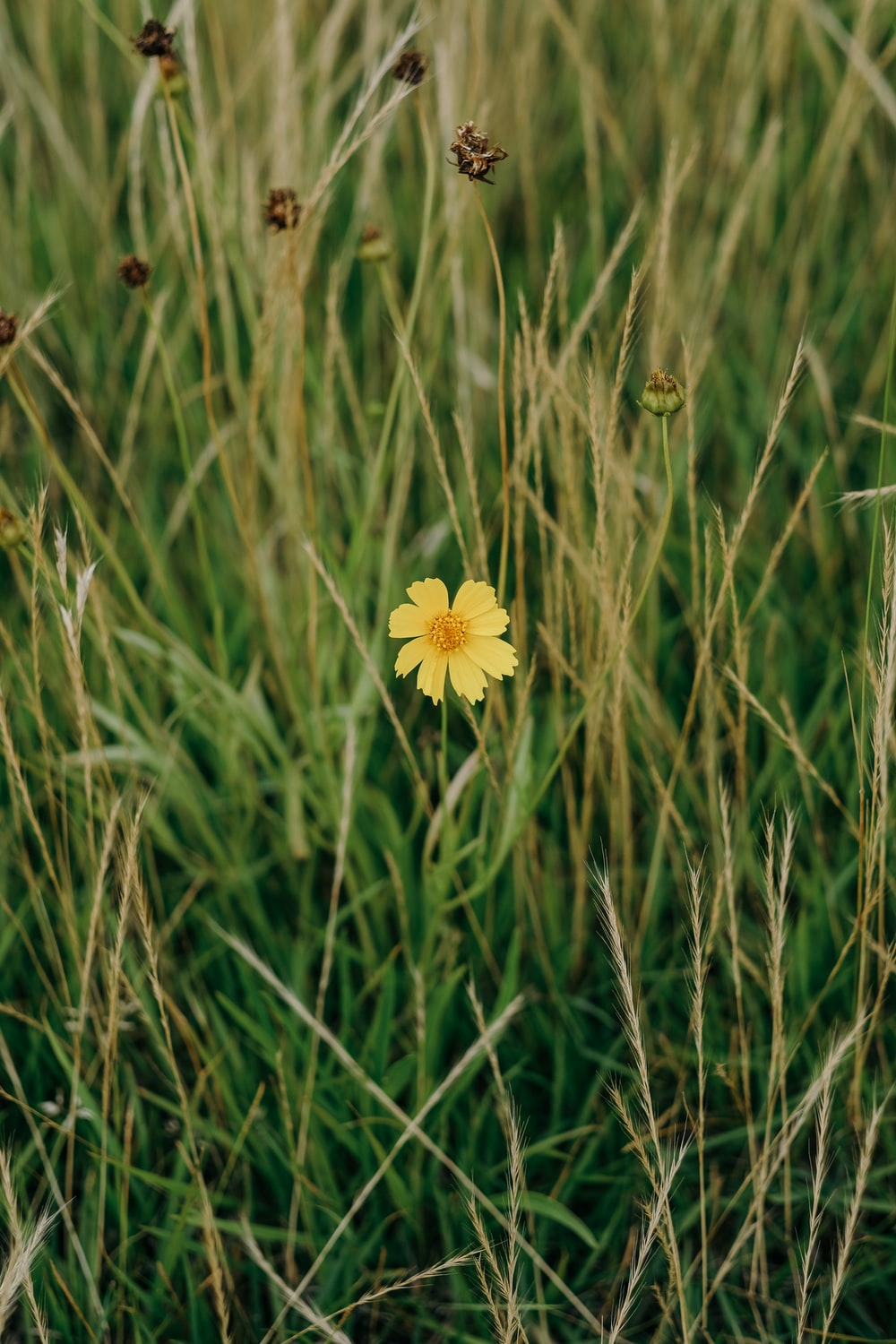 white and yellow flower on green grass field