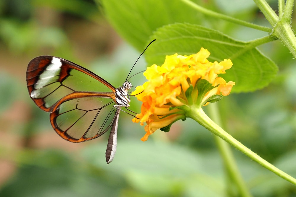 tiger swallowtail butterfly perched on yellow flower in close up photography during daytime