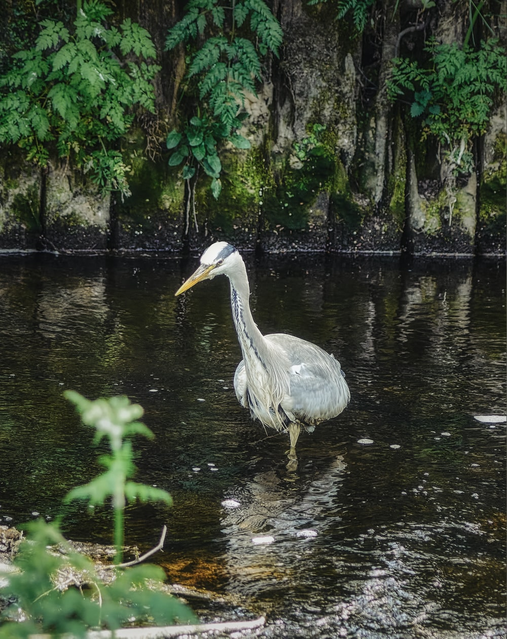 white bird on water near green plants during daytime