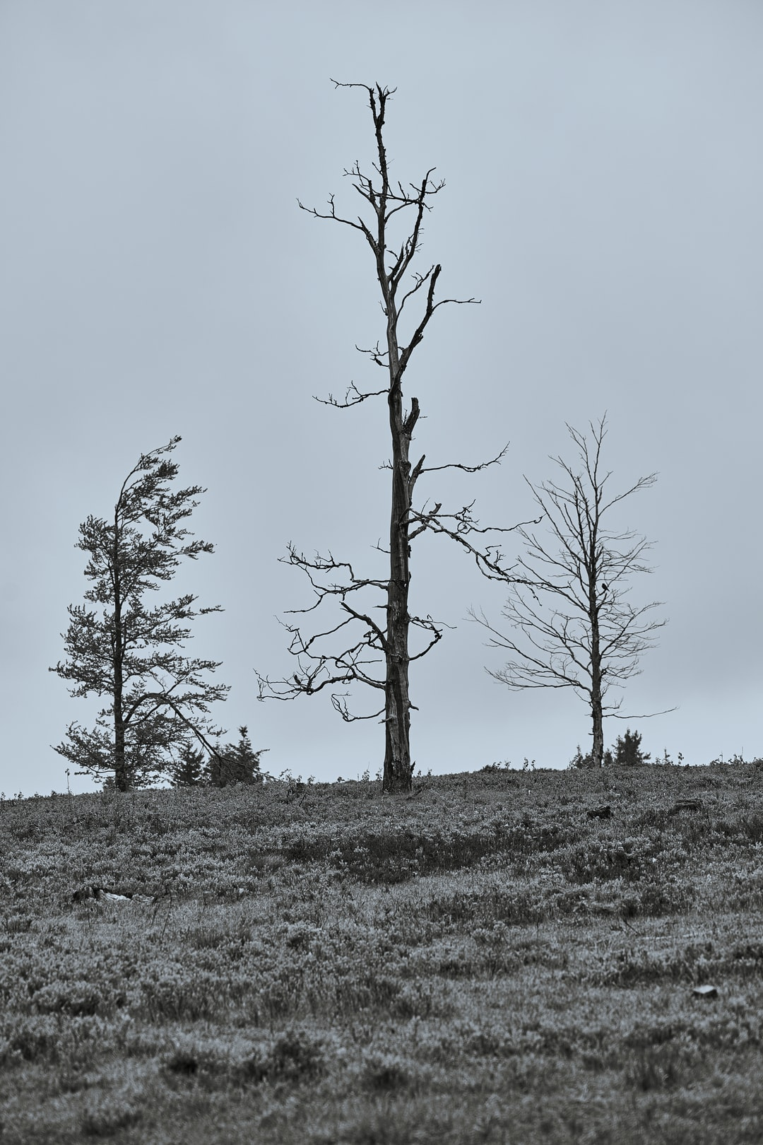 Bare trees stand on a meadow, the sky is covered with clouds.