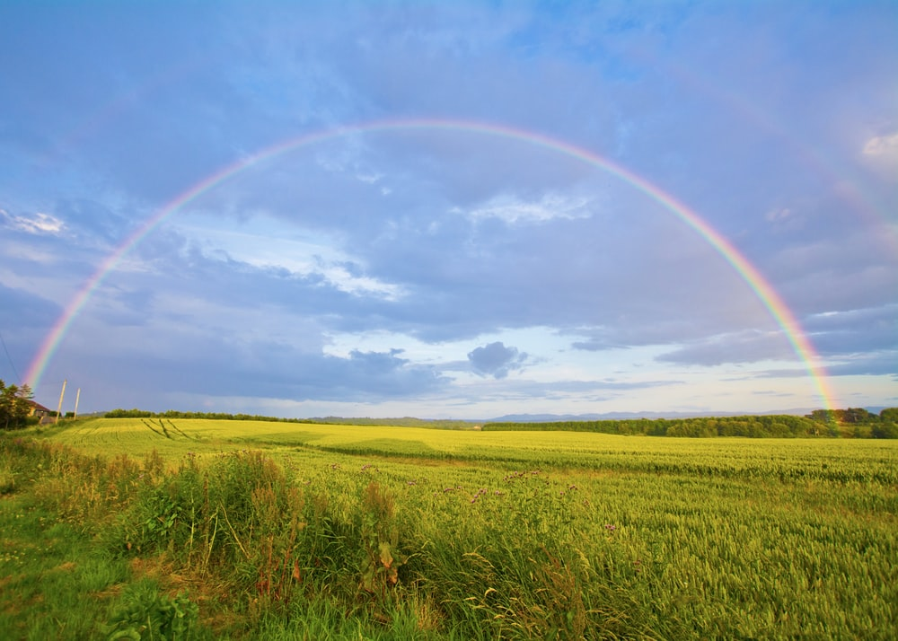 green grass field under white clouds and rainbow