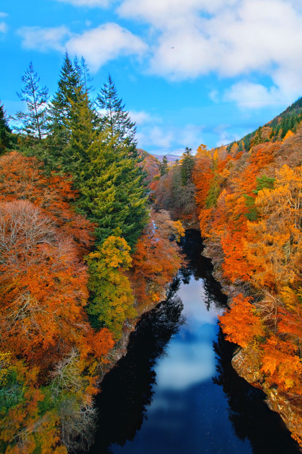 green and brown trees beside river under blue sky during daytime