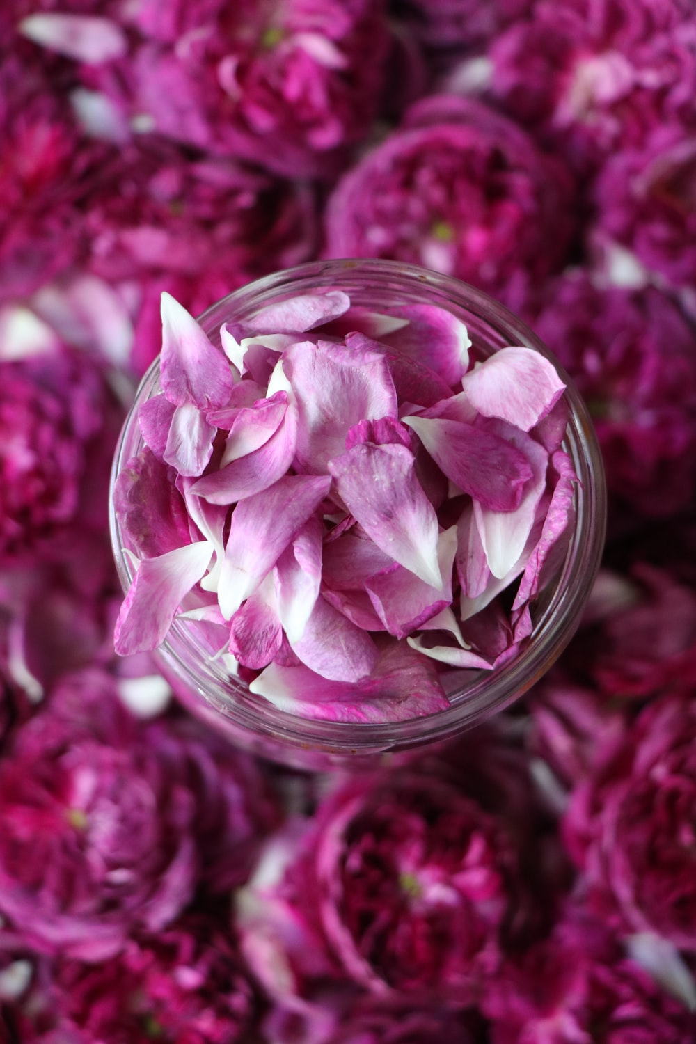 pink flower in clear glass container