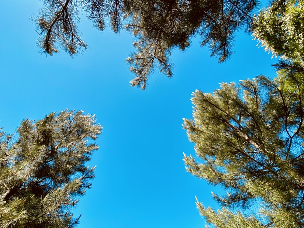 brown and green trees under blue sky during daytime