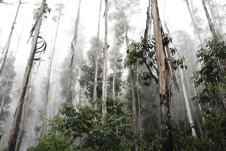 Sri Lanka forest reserve
