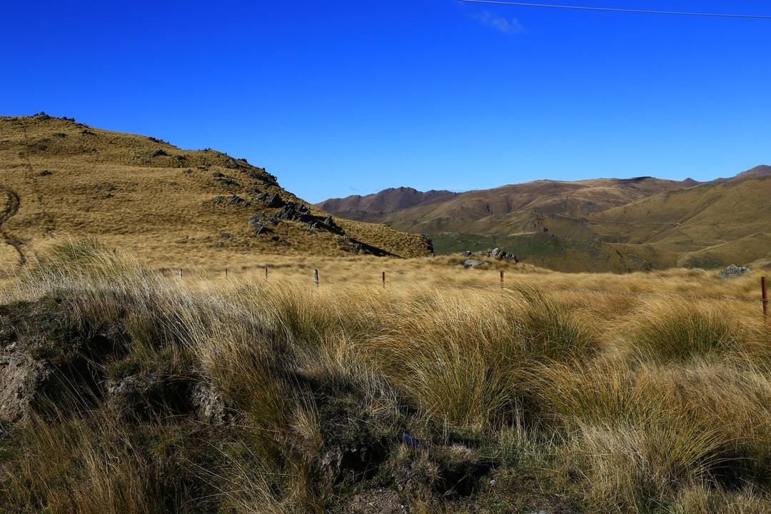 Beautiful golden tussock country in scenic New Zealand