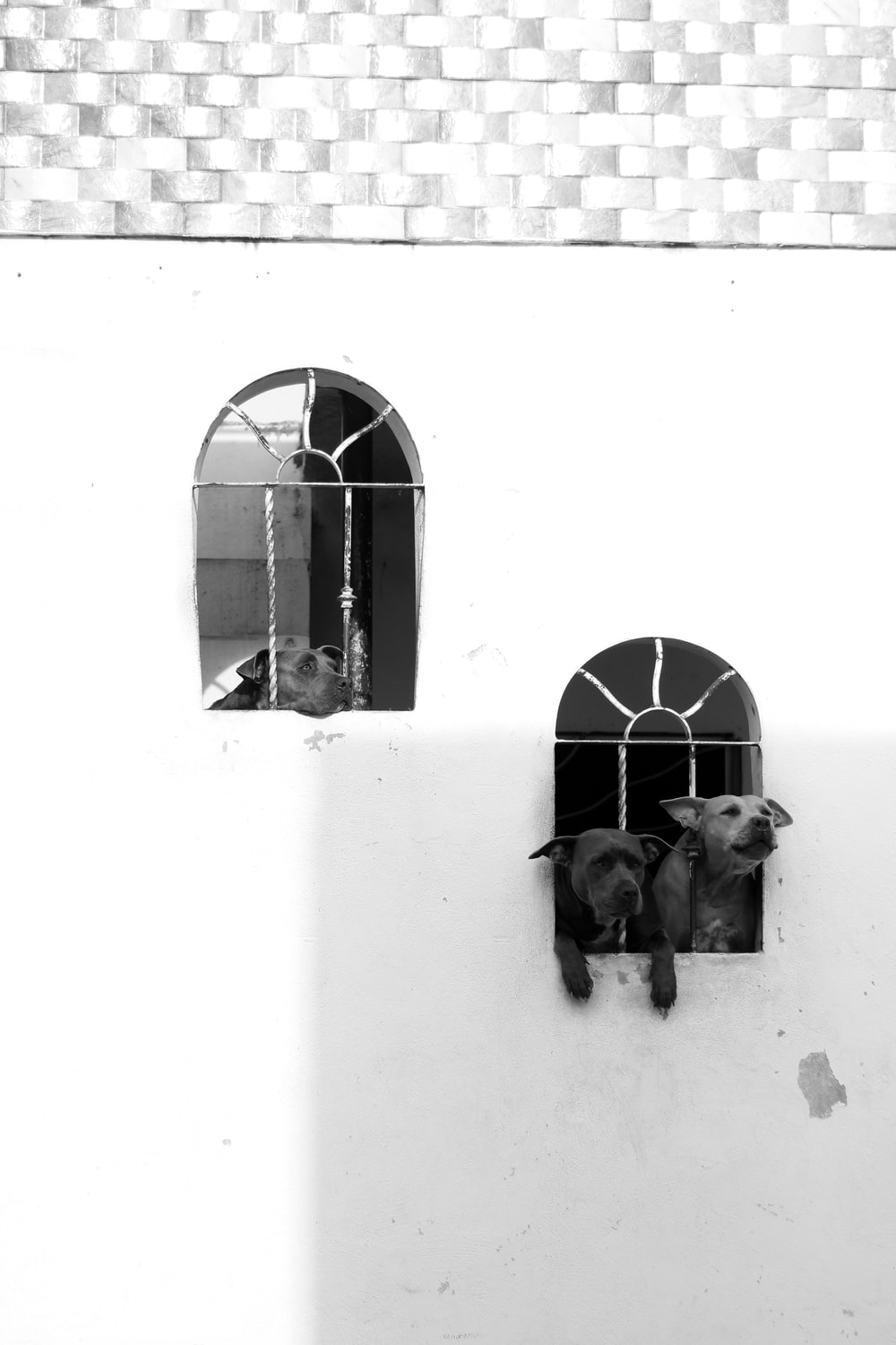 2 dogs on window in grayscale photography