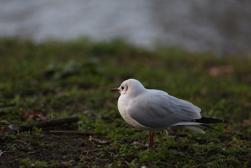 white bird on brown soil