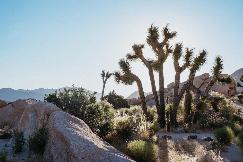 green palm trees near gray rock