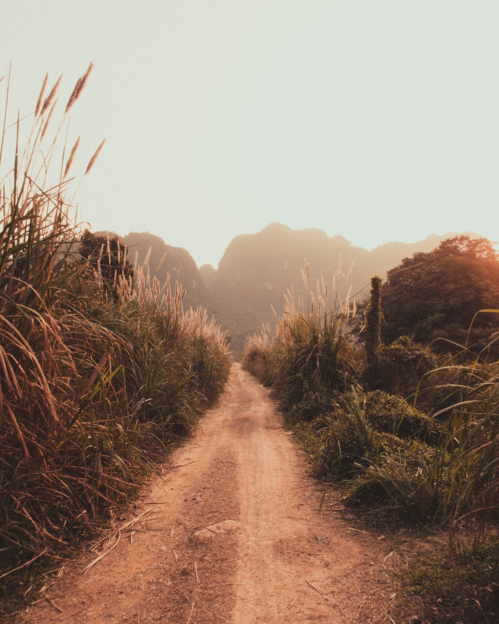brown dirt road between green grass field during daytime