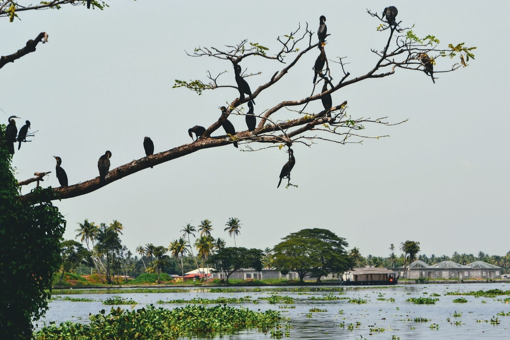 rare migratory birds on their natural habitat