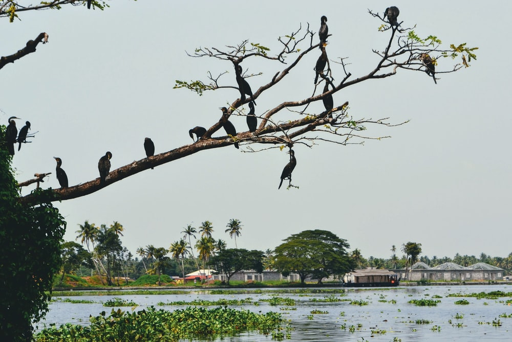 flock of birds perched on brown tree branch during daytime