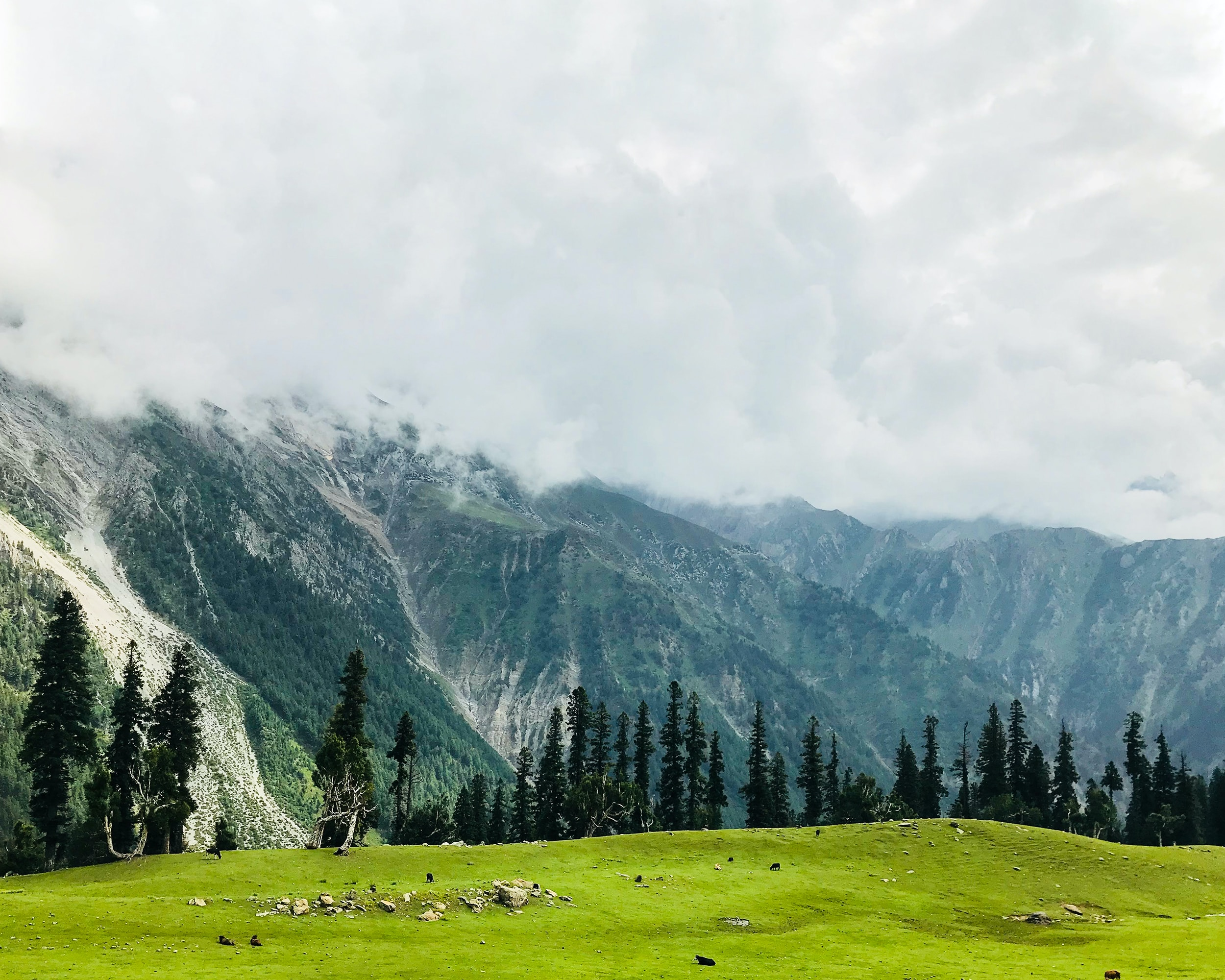 green grass field near green trees and mountain under white clouds during daytime