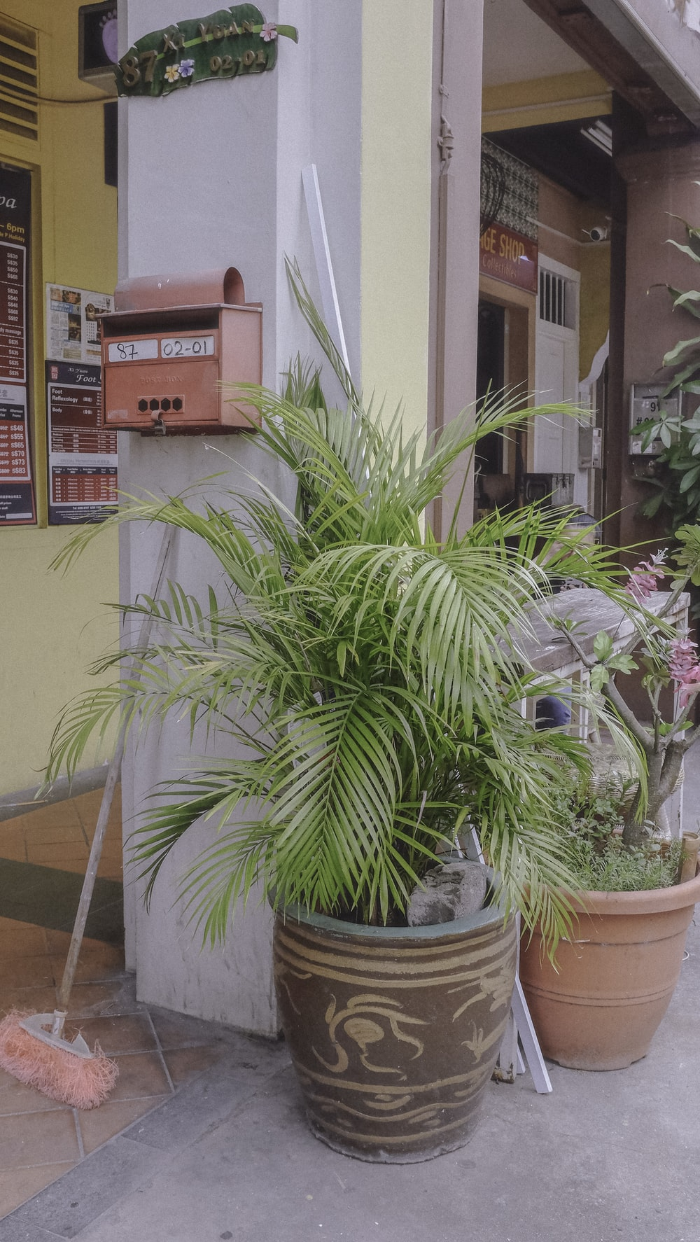 green palm plant on brown clay pot