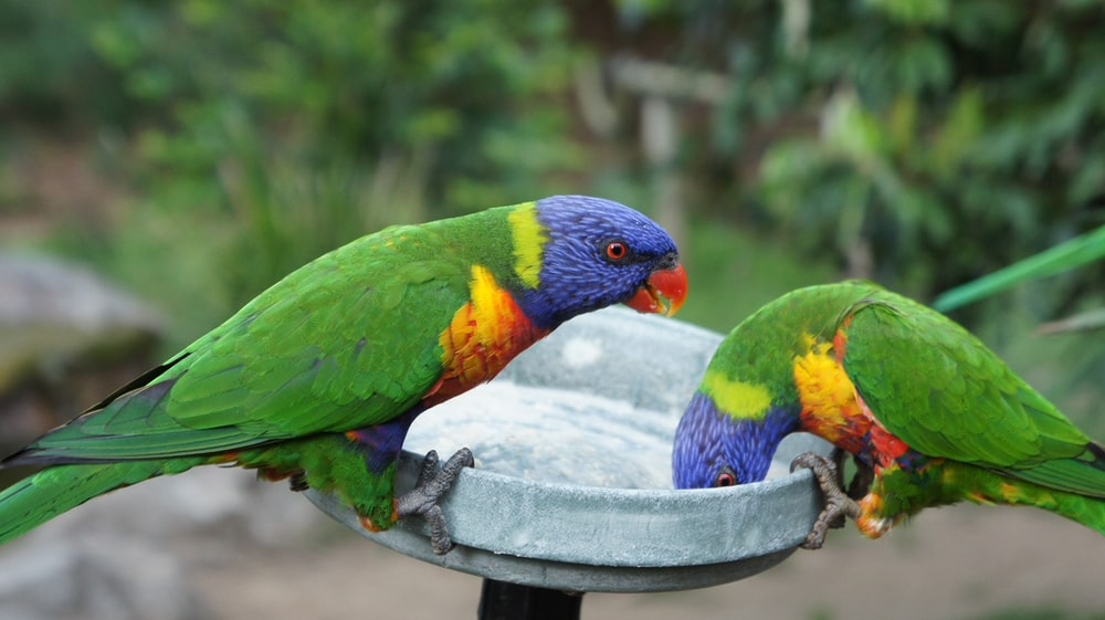 green yellow and blue bird