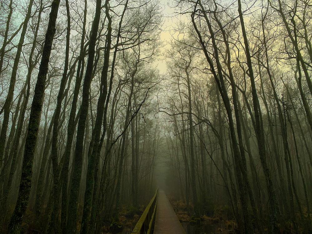 brown wooden pathway between trees