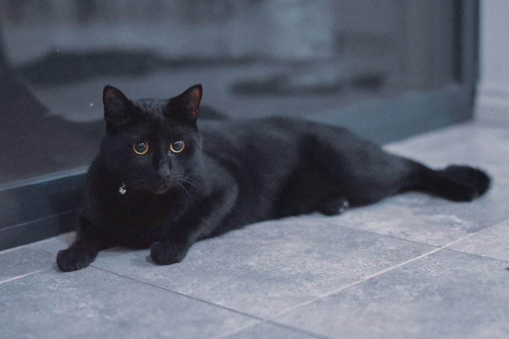 black cat on white floor tiles