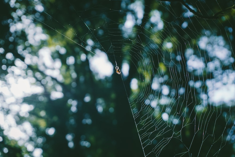 spider web in bokeh photography