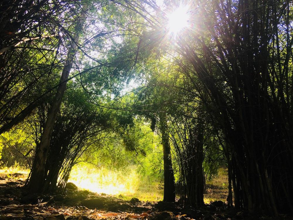green trees on brown soil during daytime