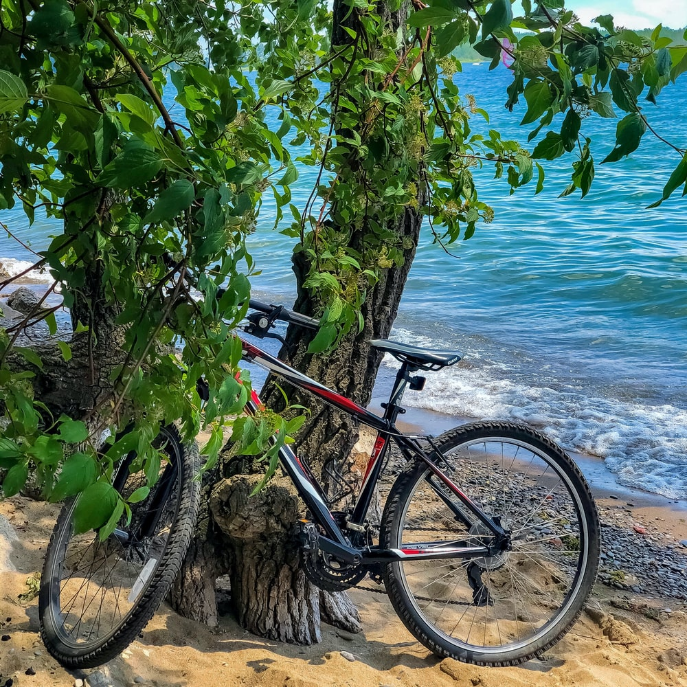 black and blue mountain bike parked beside green tree near sea during daytime