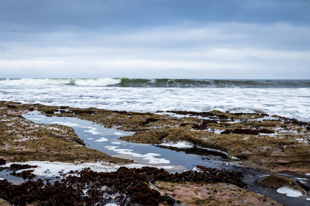 brown and green rocky shore under white cloudy sky during daytime