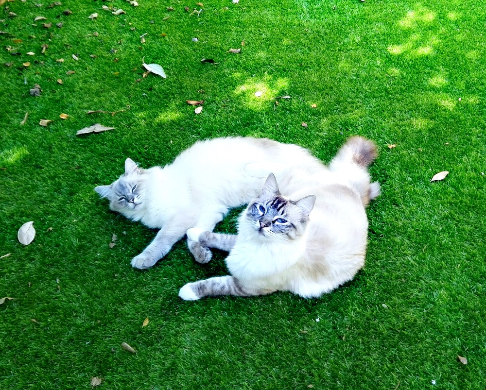 white cat lying on green grass field during daytime