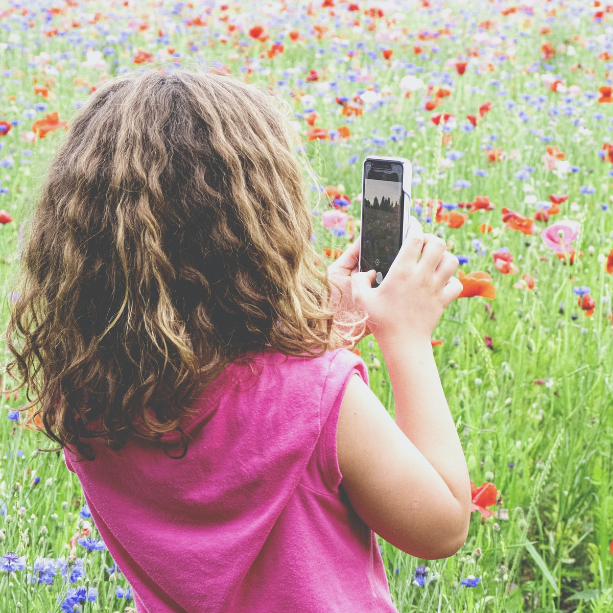 girl in pink shirt taking photo of pink flowers