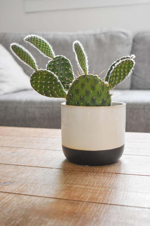 green cactus plant in white ceramic pot