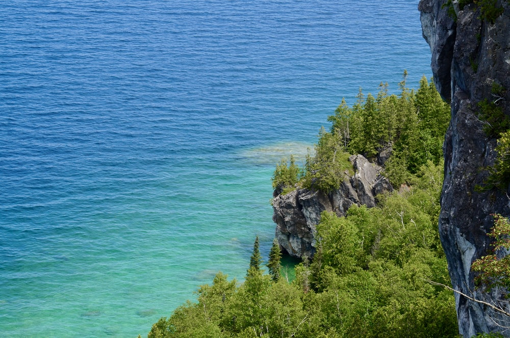 green trees on rocky mountain beside blue sea during daytime