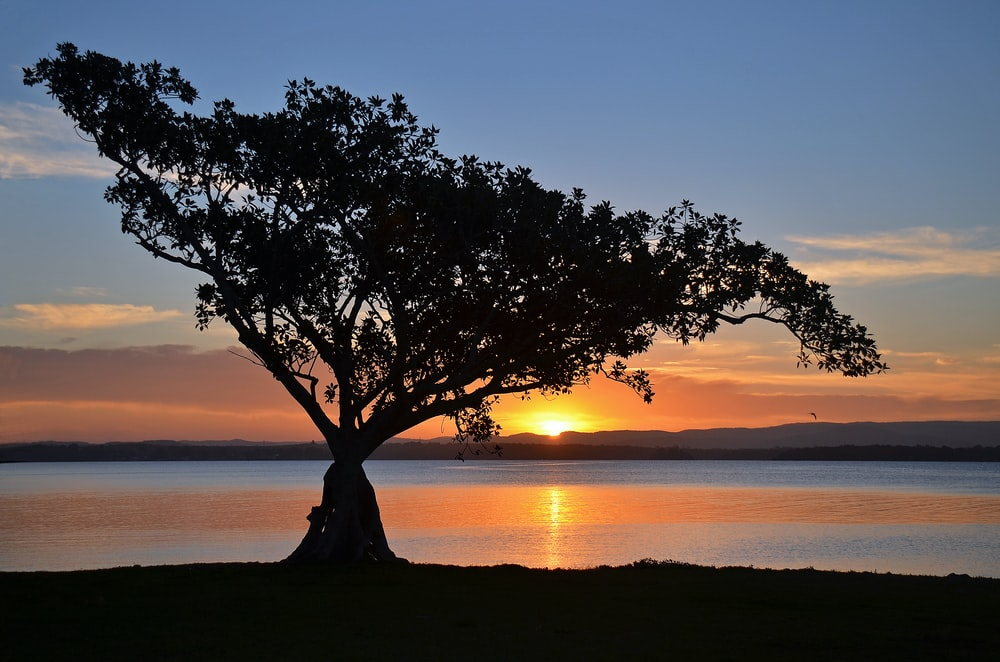 tree near body of water during sunset