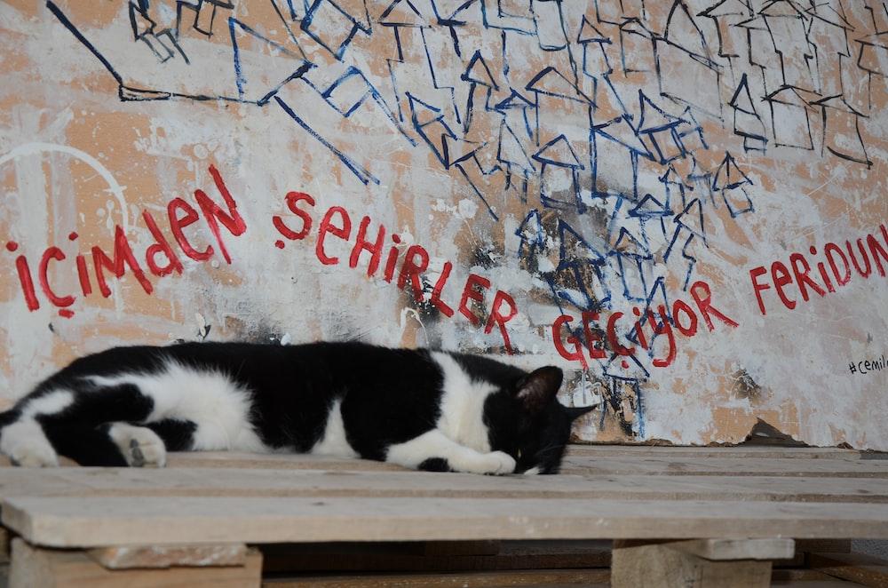 tuxedo cat on brown wooden bench